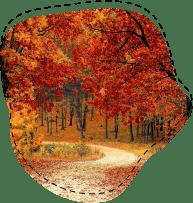 В какие страны отправиться осенью?